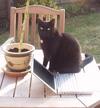 Catpowerbook